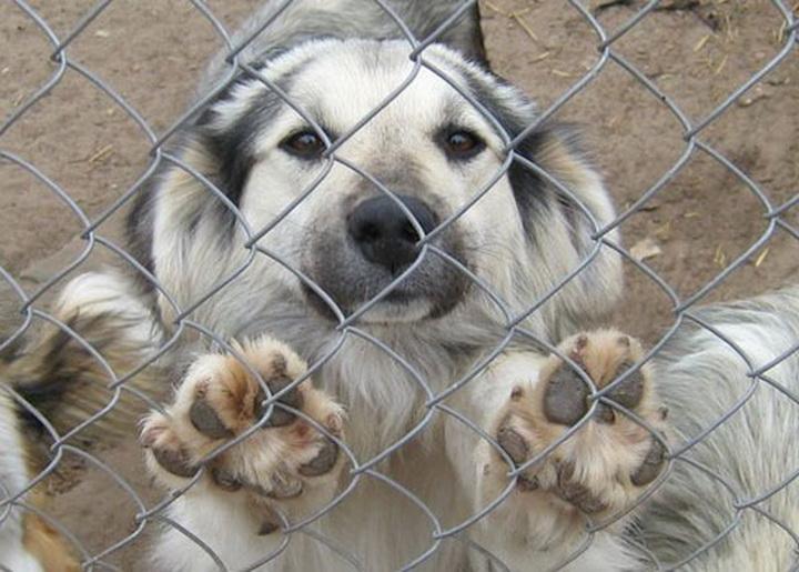 В Боровухе-3 закрывается приют для животных «Друг»