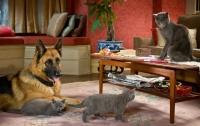 Кошки против собак: Месть Китти Галор / Cats & Dogs: The Revenge of Kitty Galore (2010)