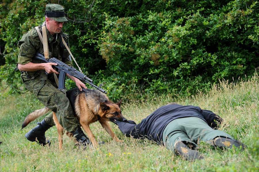 Полоцкие пограничники задержали трех нелегальных мигрантов