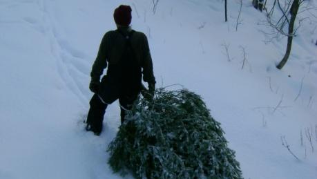 В лесу родилась ёлочка, а кто ж её срубил?