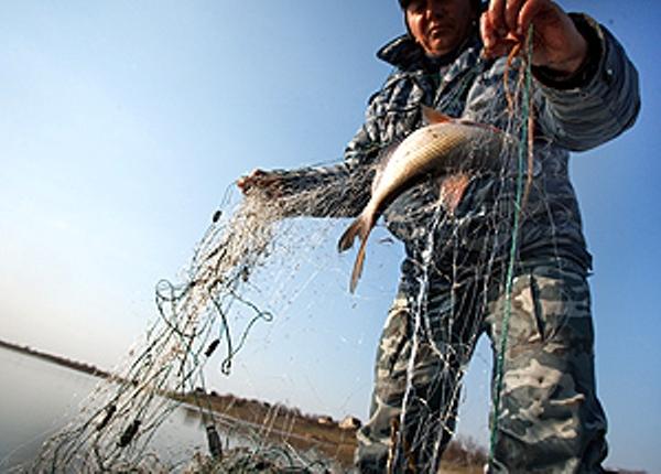 Из рыболовов – в браконьеры