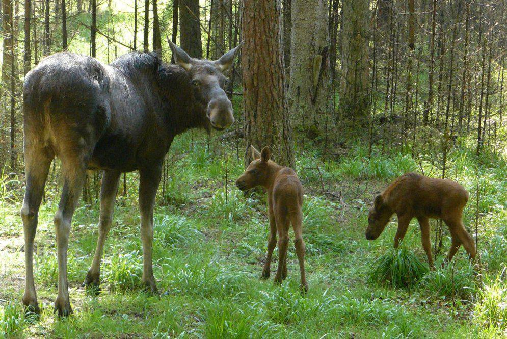 Жестокий браконьер из Полоцка наказан по закону