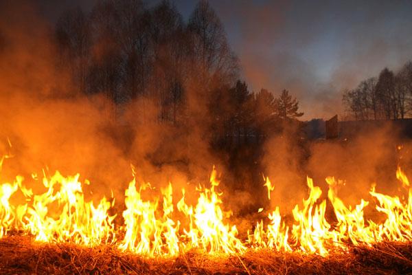 Новополоцкая служба МЧС просит жителей прекратить выжигание сухой травы