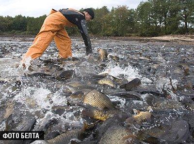 Официально в рыболовном хозяйстве