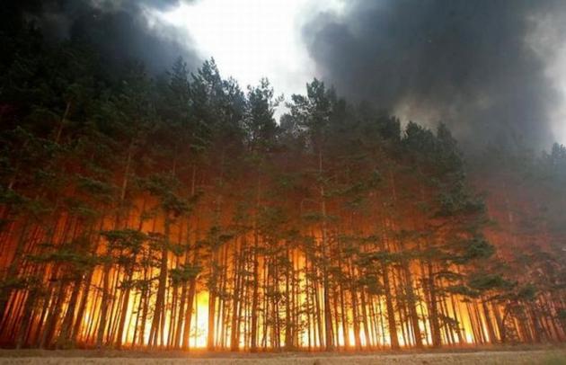 В связи с установившейся жарой в Полоцке объявят