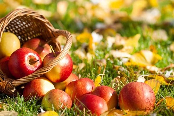 Яблочный спас в Полоцке