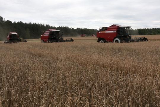 На полях Полоцкого района закончилась уборка зерновых и зернобобовых