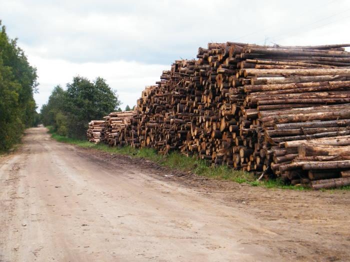 Полоцкий лесхоз