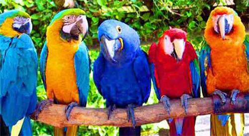 В Новополоцке покажут редкие виды попугаев