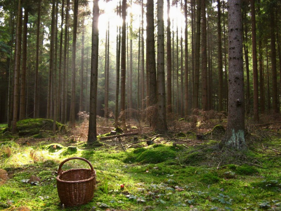 В Полоцком районе продолжаются поиски заблудившейся 83-летней женщины