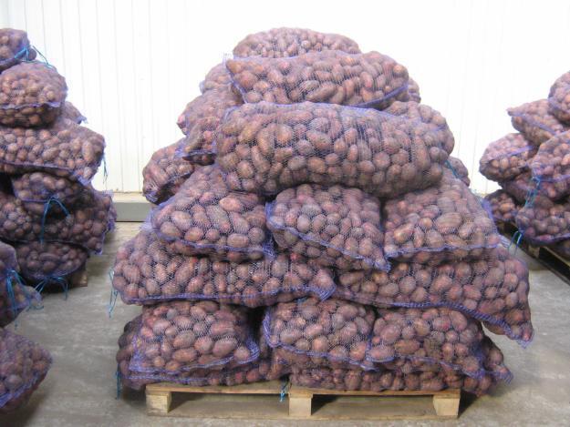 В Полоцке организована ежедневная выездная торговля плодоовощной продукцией ...