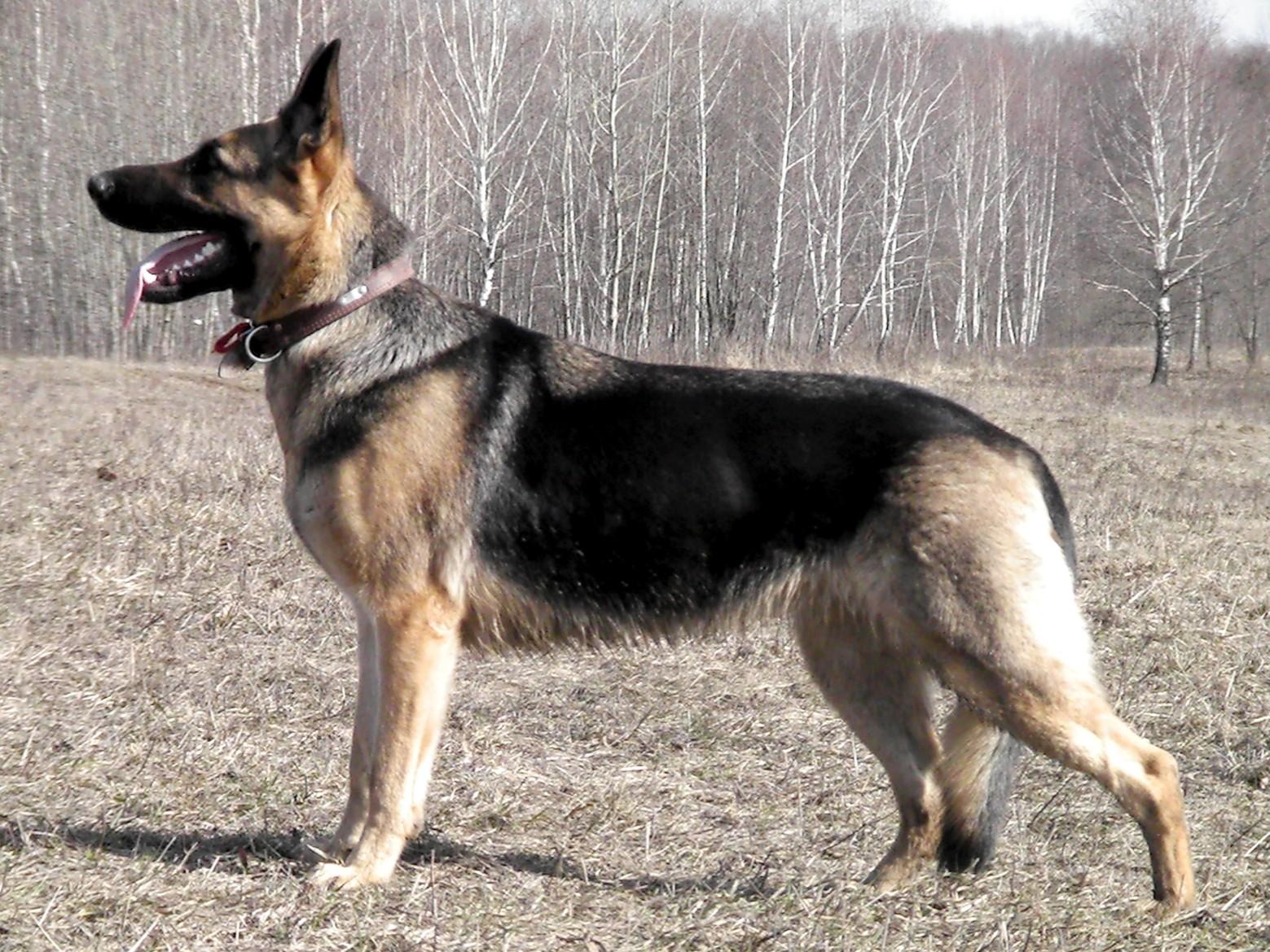 В Полоцке служебный пес помог в задержании преступников