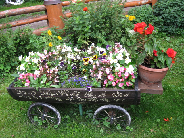 У полоцких цветоводов началась посевная компания