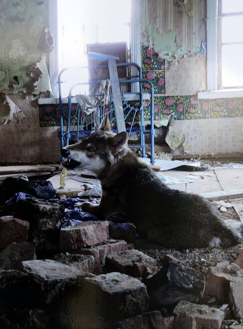 В Полоцке открылась выставка «Чернобыльских джунглей»