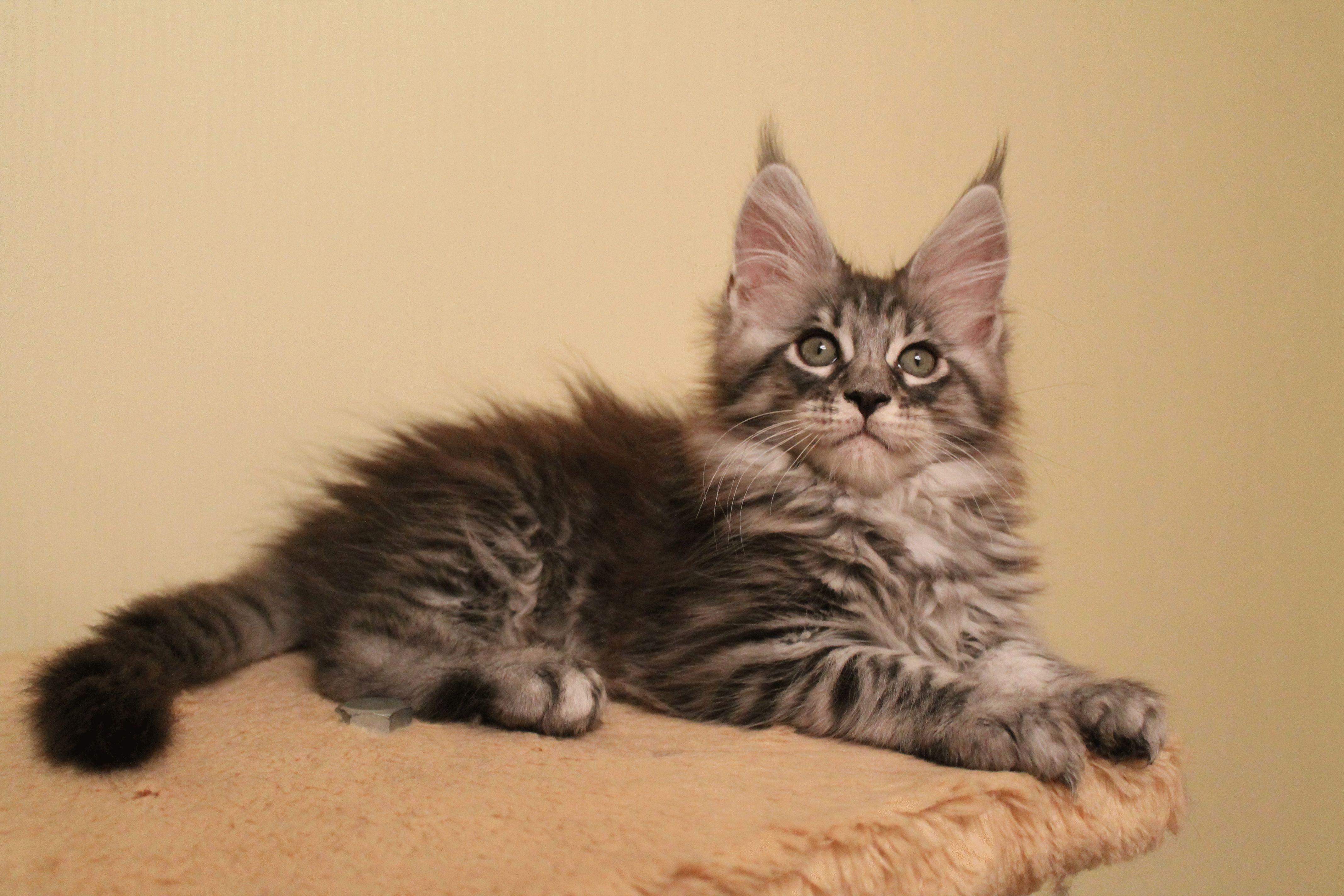 Купившая котенка полоцкая школьница стала жертвой мошенницы