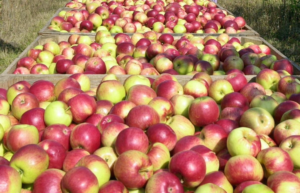 Таможня задержала более 67 т нелегальной фруктовой продукции