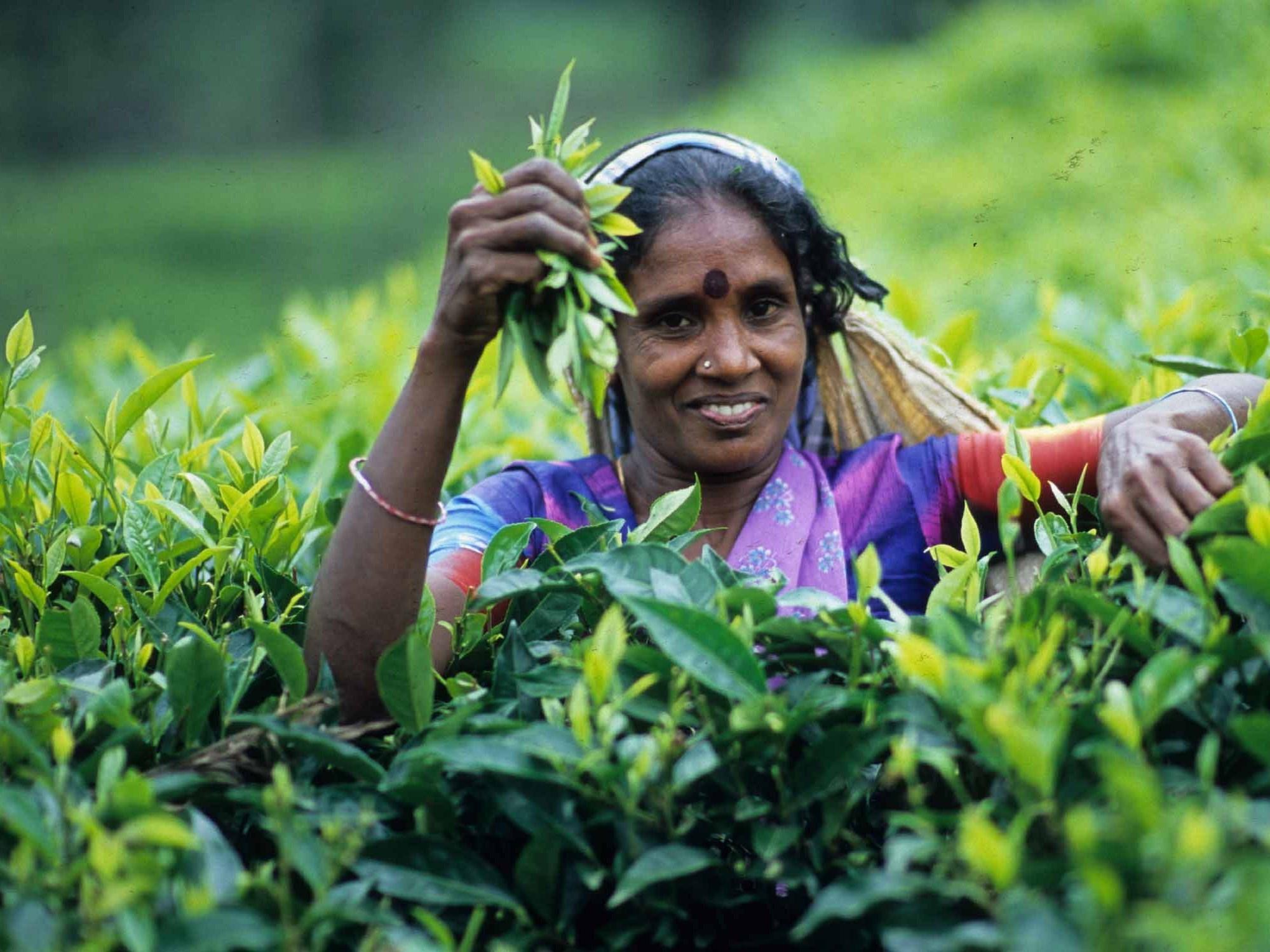 Бизнесмен из Витебска обманул партнёра из Шри-Ланки на 34 тысячи долларов