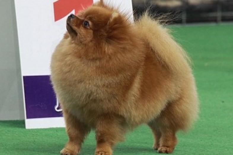 В Боровухе прошла выставка собак