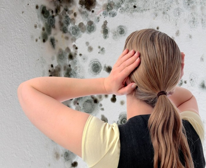 Грибок в квартире – опасность замедленного действия
