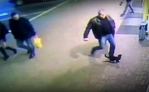 Милиционера из Полоцка уволили за то, что пнул ногой котенка
